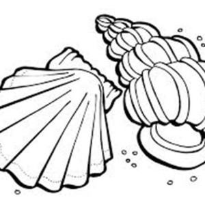 Lions Paw and Florida Cerith Seashell Coloring Page