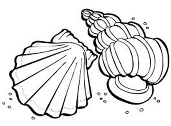 Lions Paw and Florida Cerith Seashell Coloring Page Download
