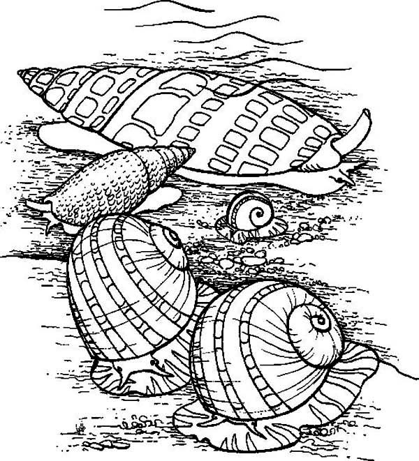 Living Seashells In The Beach Coloring Page Living