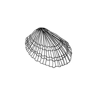 Lovely Van Hynings Cockle Seashell Coloring Page