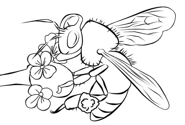 Bumblebee Realistic Image Over The Flower Coloring Page