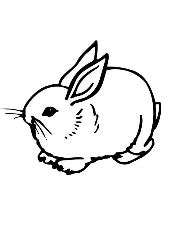 Bunnies, : Realistic Image of A Sweet Little Bunny Coloring Page