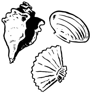 Three Unique Seashell Types Seashell Coloring Page