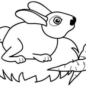 Bunnies Two Delicious Carrots For Mr Bunny Coloring Page