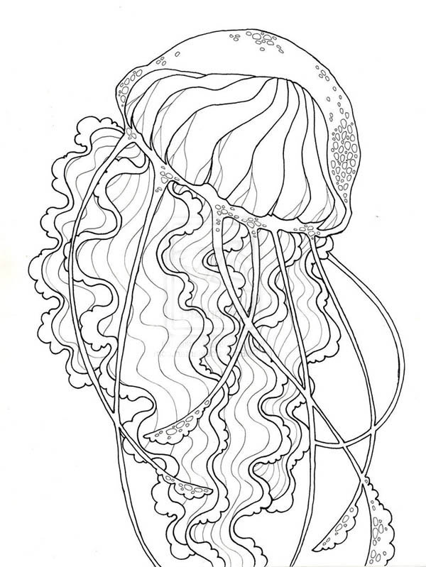 beauty jellyfish coloring page: beautyjellyfishcoloringpage.jpg \u2013 Color Nimbus