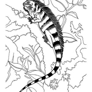 black striped iguana coloring page