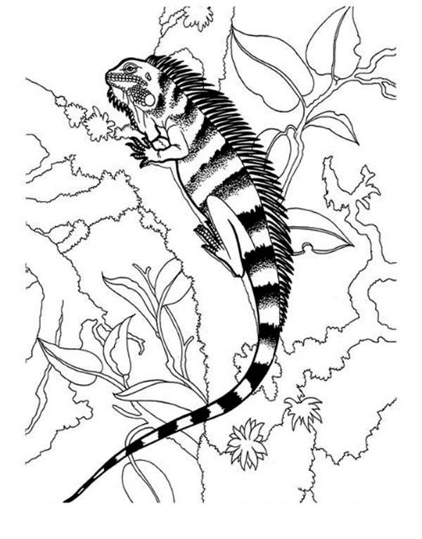 black striped iguana coloring page