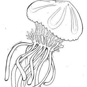 box jellyfish coloring pages | realistic jellyfish alphabet J coloring page: realistic ...