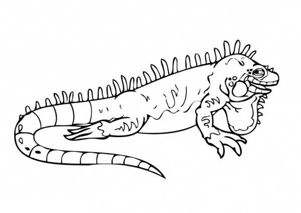 charming big iguana coloring page - Iguana Coloring Page