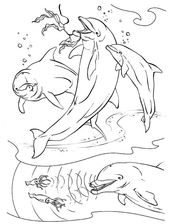 knuffle bunny too coloring pages | dolphins hunt squids using sonar and they like vegies too ...