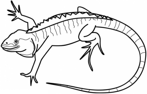 galapagos iguanas coloring pages - photo#2