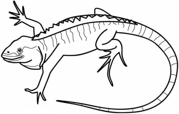 galapagos iguanas coloring pages - photo #2