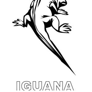 galapagos sea iguana coloring page