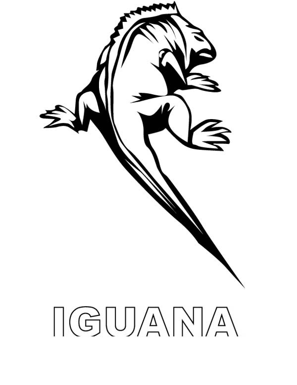 galapagos iguanas coloring pages - photo#9