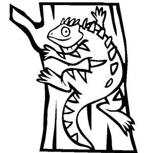 galapagos sea iguana coloring page: galapagos-sea-iguana-coloring ...