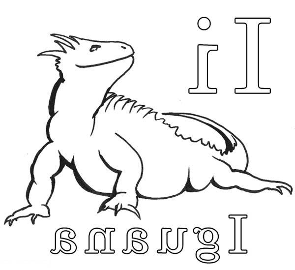 galapagos iguanas coloring pages - photo #23