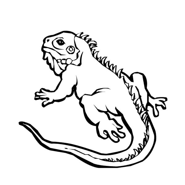 Iguana Crawl On The Ground Coloring Page For Kids