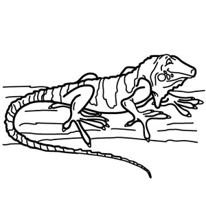 iguana on a wood coloring page for kids