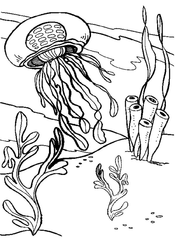 jelly fish and seaweed coloring page