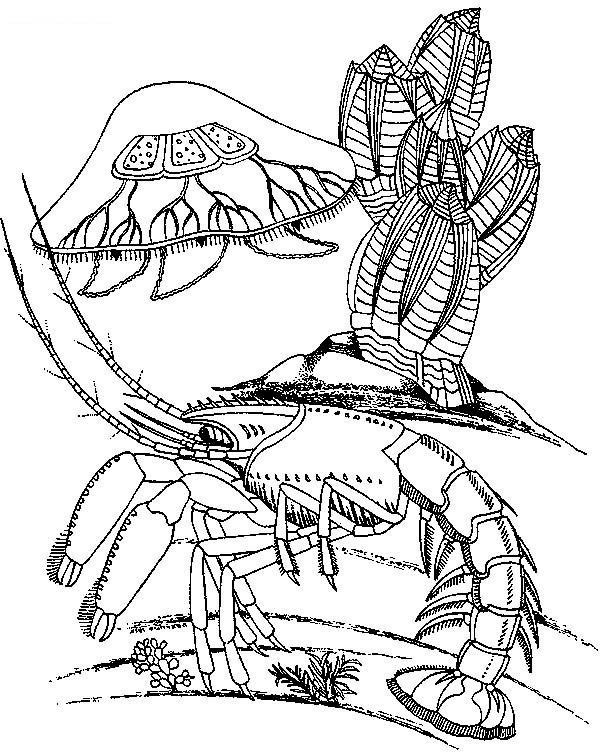 jellyfish and lobster coloring page - Lobster Coloring Page