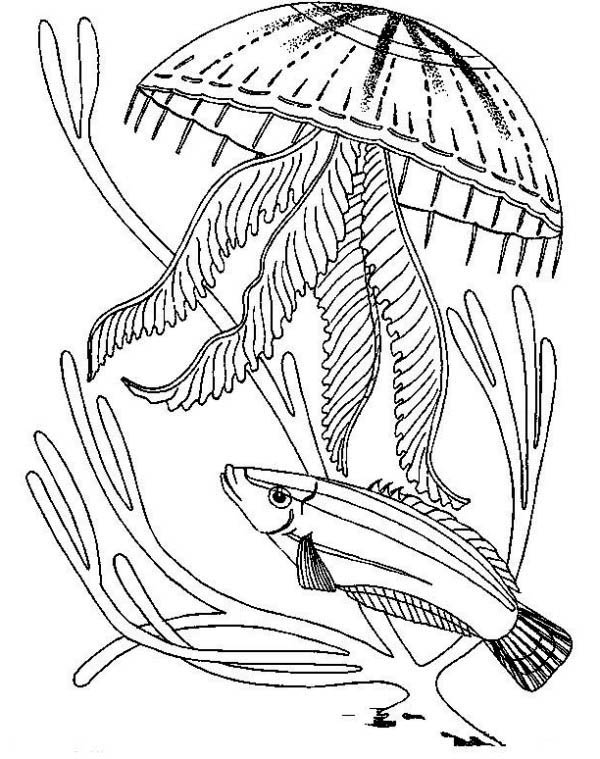 how many jellyfish coloring page twisty noodle
