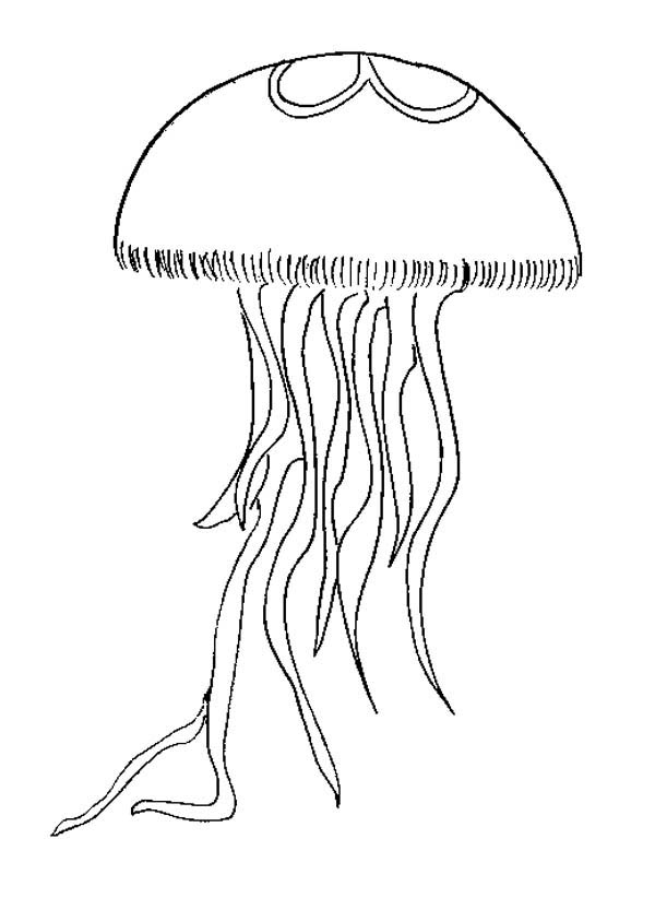 coloring pages jellyfish - photo #35