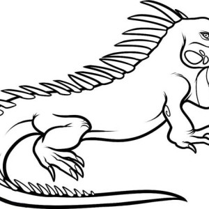 large male dominant iguana coloring page