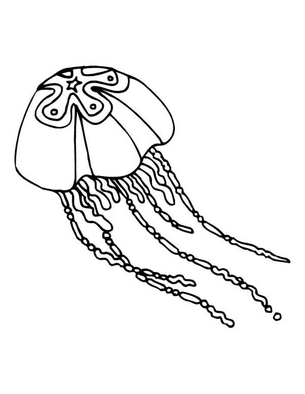 star jellyfish coloring page  Download  Print Online Coloring