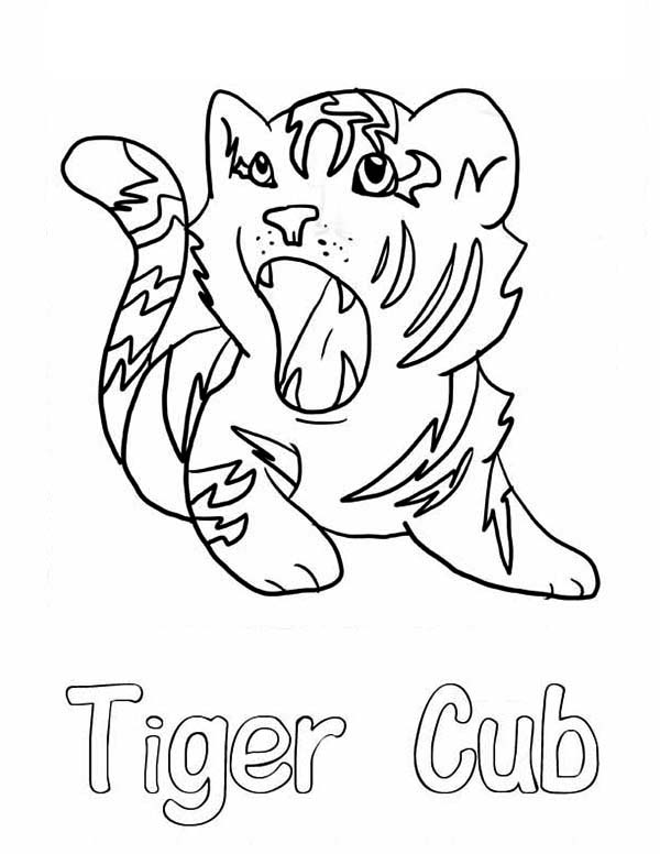 A cute roaring of little tiger cub coloring page for Coloring pages tiger cubs