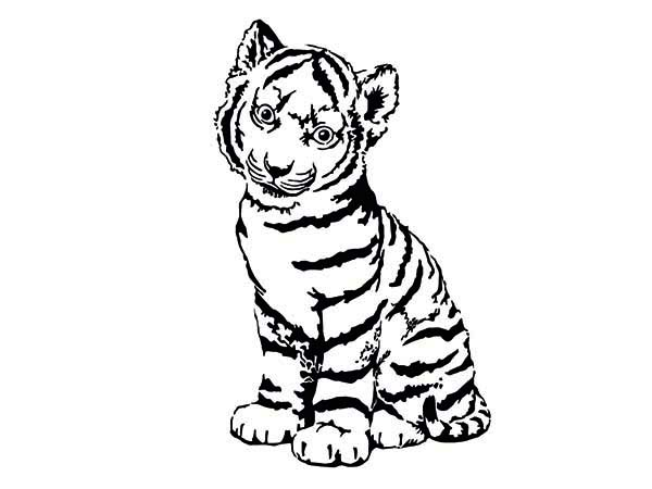 A Cute Tiger Cub In Front Of Camera Coloring Page