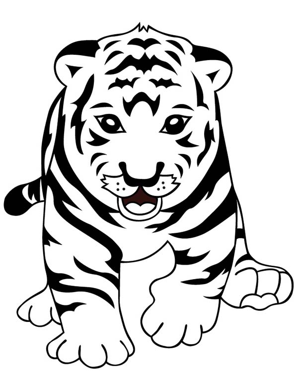Baby tiger free colouring pages for Coloring pages tiger cubs