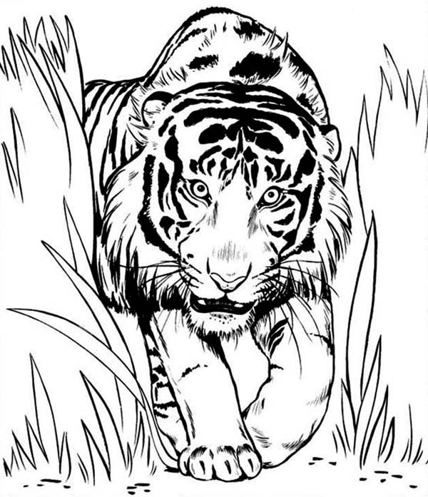 real steel ambush coloring pages - photo#20