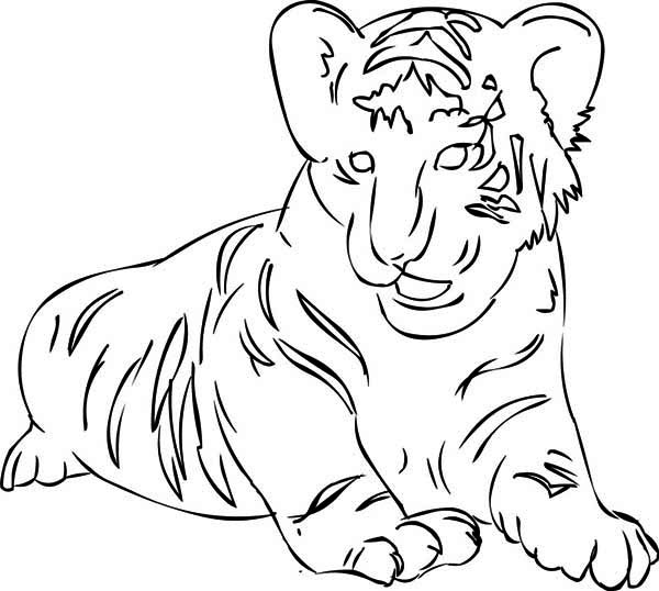 A figure of siberian tiger cub coloring page download for Coloring pages tiger cubs