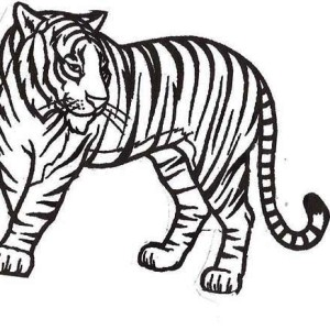 A Healthy Sumatran Tiger in the National Park Coloring Page