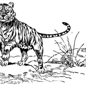 A Looking Wierd Tiger in the Wild Coloring Page