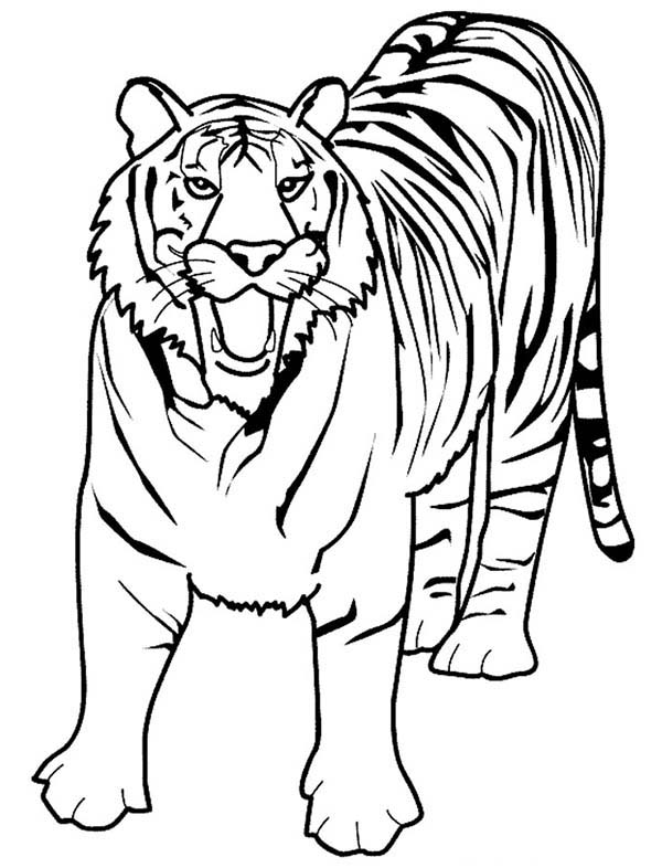 A Loud Roaring Of Bengal Tiger Coloring Page