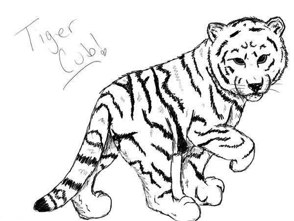 A nice sketch of white tiger cub coloring page
