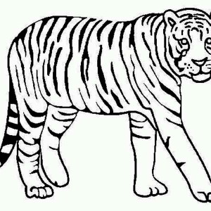 a tiger looking over its territory coloring page - Coloring Pages Of Tigers