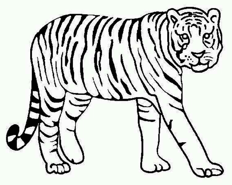 A Tiger Looking Over Its Territory Coloring Page A Tiger