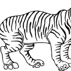 A Tiger is Ready to Jump Coloring Page