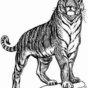 a tiger on guard posture coloring page - Coloring Pages Tigers Print
