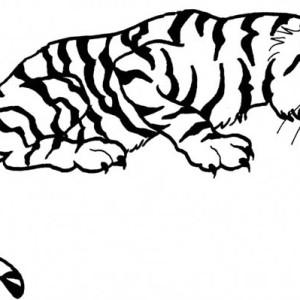 a tiger on its ambushing posture coloring page