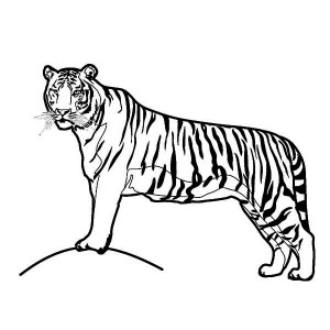 A Tiger on Its Hunting Postition Coloring Page
