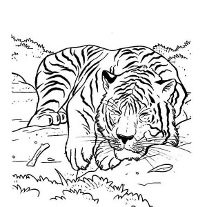 A Tiger on Its Napping Time Coloring Page