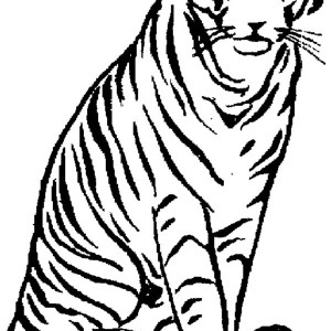 An Already Tamed Tiger In A Zoo Coloring Page