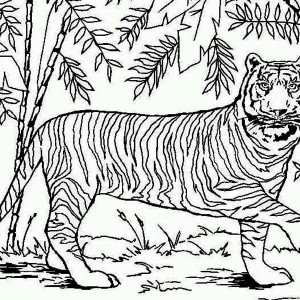 An Asian Tiger in Bamboo Forest Coloring Page