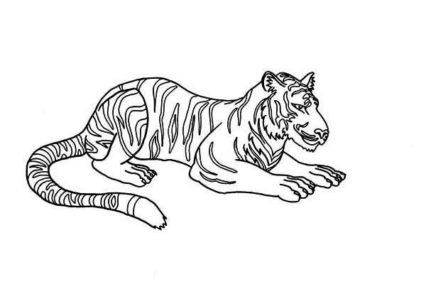 An Illustration of Siberian Tiger Coloring Page Download