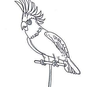 Awesome Parrot Coloring Page