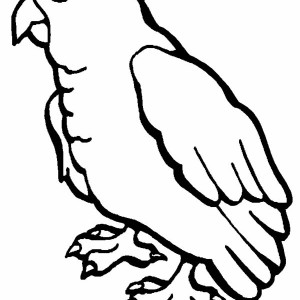 Baby Parrot Coloring Page