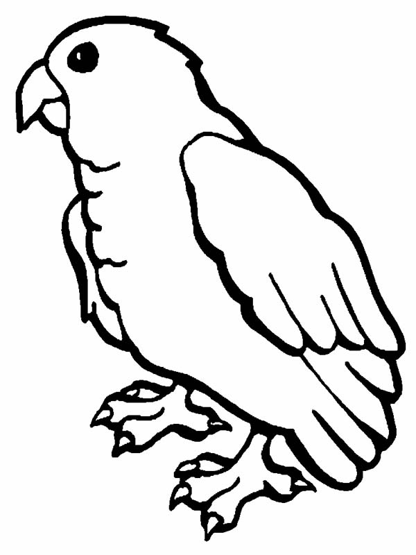 Baby Parrot Coloring Page - Download & Print Online Coloring Pages ...